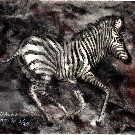Thumb Galoppierendes junges Zebra